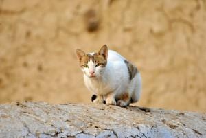 cat-72568_1280